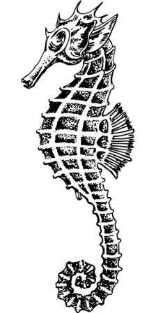 dibujo de caballito de mar